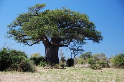 044_baobab.jpg