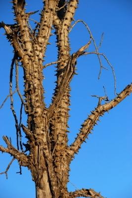 065_olovnaty_strom.jpg